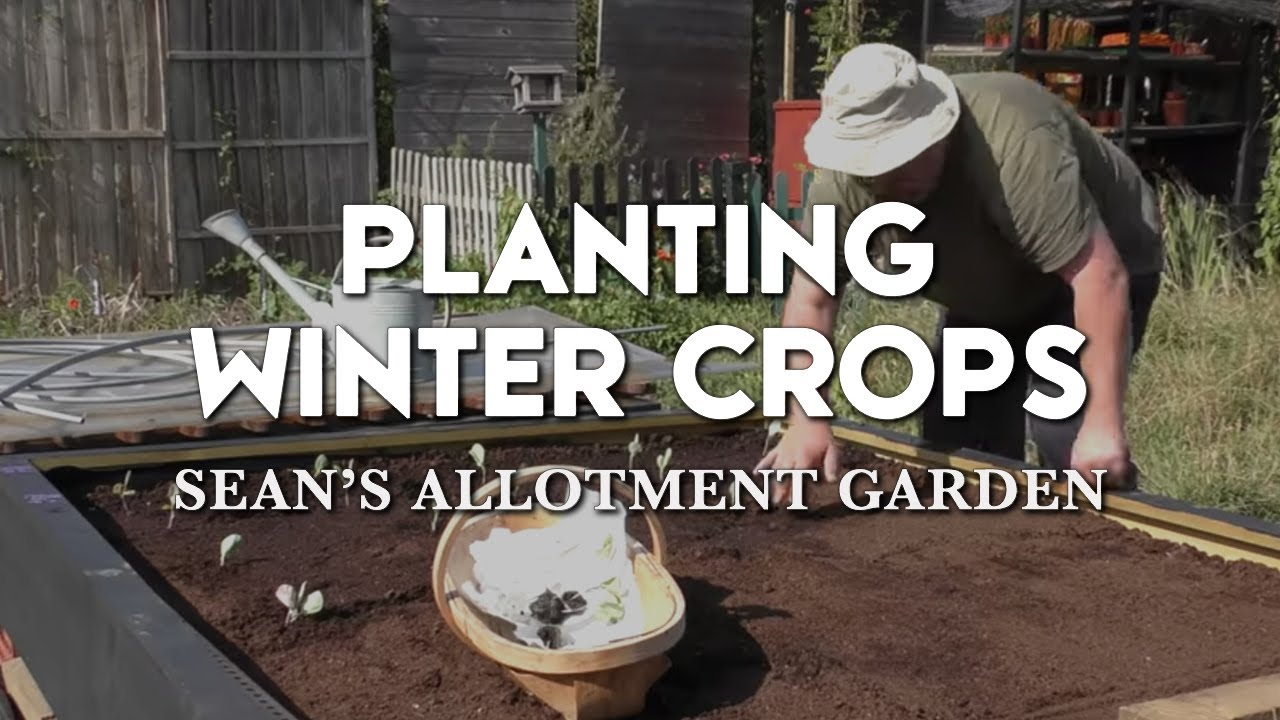 Planting Winter Crops | What to grow for Winter harvests? | Raised-bed Gardening