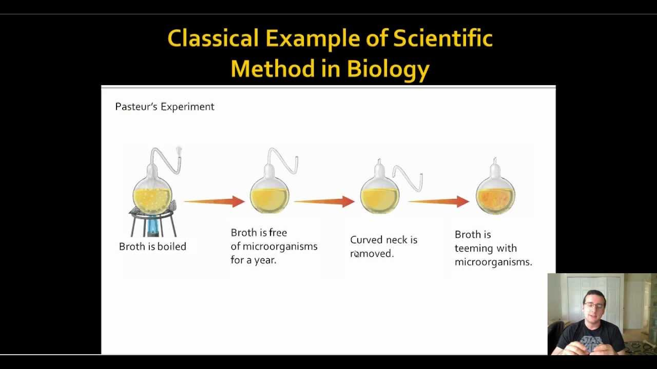 Classic Biology Example Of Scientific Process Spontaneous