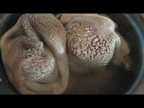 Goat Intestine | Cleaning and Cooking | Part 1
