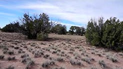 35 Acres in Apache County Arizona For Sale 15 Min from Petrified Forest National Park