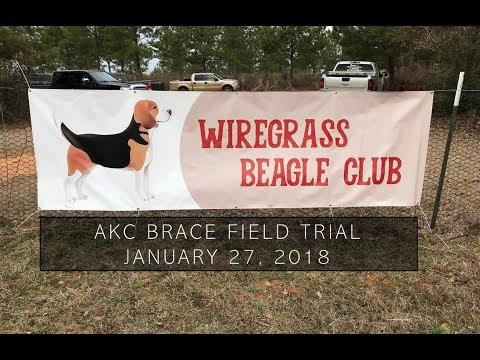 Akc Brace Field Trial 15 Females Jan 27 2018 Benson S Kennel