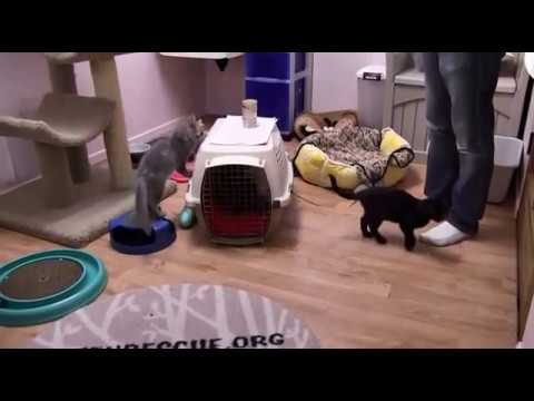 Cleopatra and Penny Are Adopted
