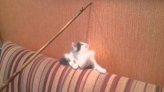 Великолепных котят отдадим в хорошие руки