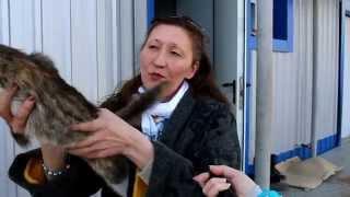 К лету в Уфе появится приют для бездомных кошек