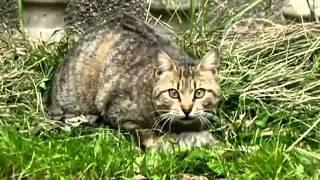 Кошка нашла своих котят мертвыми и спасла последнего котенка
