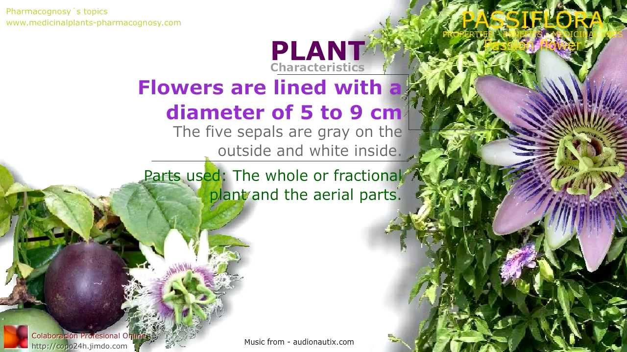 Passiflora Or Passion Flower Health Benefits Of The Plant Passion