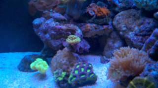 Poor Man's Reef Tank