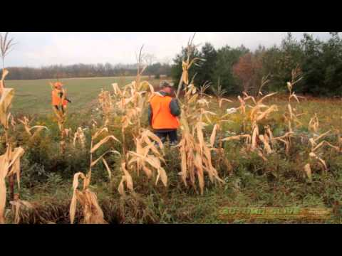 Hunting In Ontario Canada.  Pheasant, Deer, Turkey And Duck