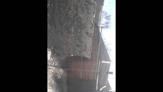 видео Стеклянные заборы