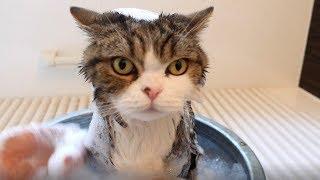 シャンプーされるまる。Maru's shampoo 2.