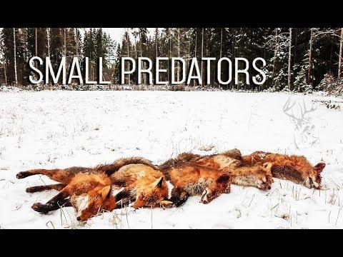NH: Pienpedot 2016 |  Predator hunting in Finland