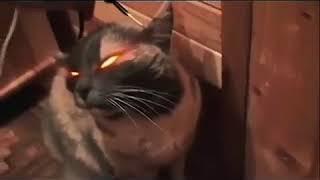 Кошка Мария 220v