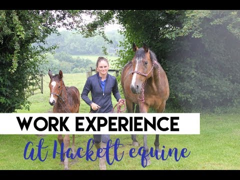 WORK EXPERIENCE AT HACKETT EQUINE| A Vlog