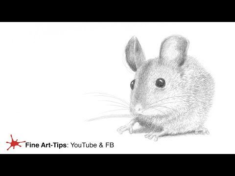 how-to-draw-a-mouse---easy-and-realistic---narrated