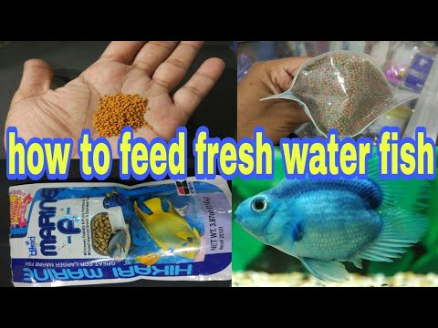 How To Feed Freshwater Fish