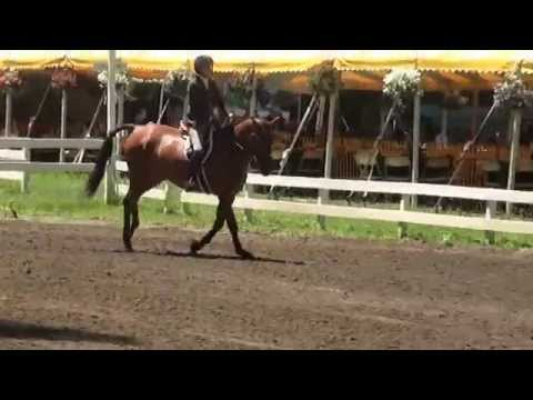 "BRANDO 3'0"" Pre-Green's at Saratoga Classic Horse Show Week 2"