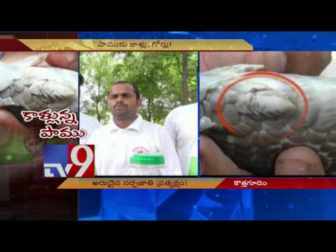 Rare Snake with legs found in Khammam - TV9