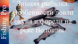 видео Особенности зимней рыбалки на голавля