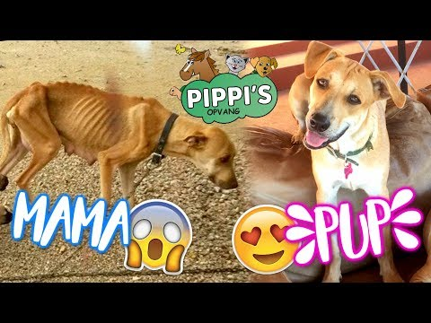 Dieren Curaçao voorstellen + welke zijn ter adoptie?   felinehoi