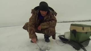 Видео зимняя рыбалка на оби
