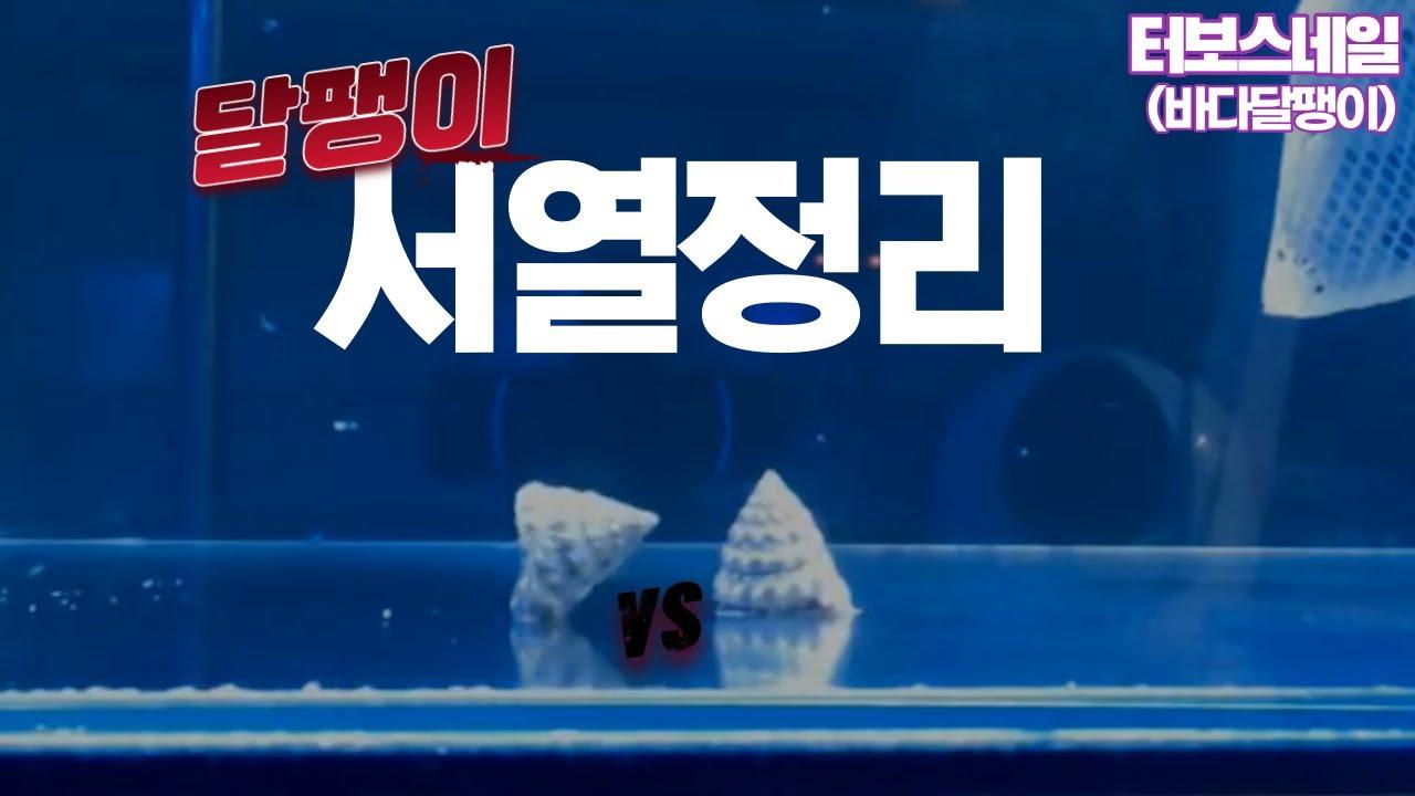 [터보스네일] 해수 달팽이 vs 달팽이 귀여운 꼬마들의  치열한 싸움 !