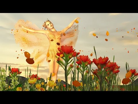 🌹 Birthday greetings video animation with Butterfly