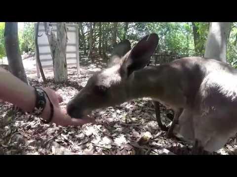 AUSTRALIA - Travel Video