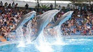 ZooMarine Algarve, Guia, Albufeira, Portugal Dolphin Show Oceans of Fun