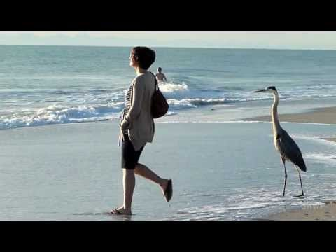 Sanibel Island + Captiva Island (Florida) - In A Brooklyn Minute (Week 104) [HD]