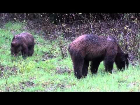 Wilderness Bear Safety Part 1 of 2