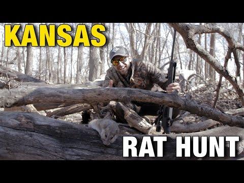 Kansas Air Rifle Airgun Rat Hunting Adventure : American Airgunner TV