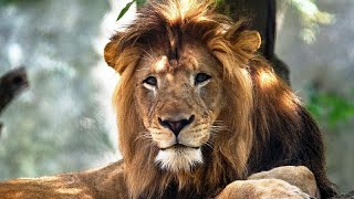 USA: Indianapolis Zoo staff 'devastated...