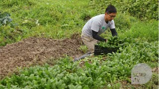 How Hong Kong's organic vegetables are grown