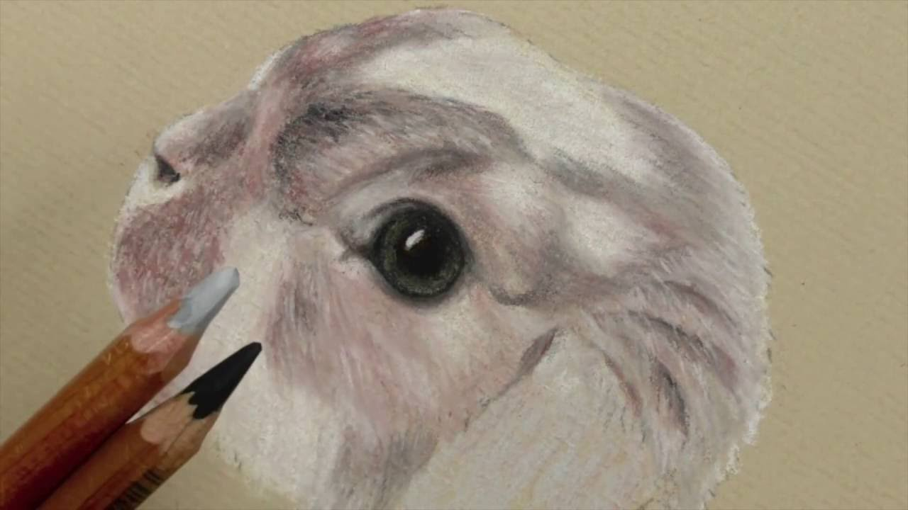 draw a bunnys eye how to use pastel pencils youtube