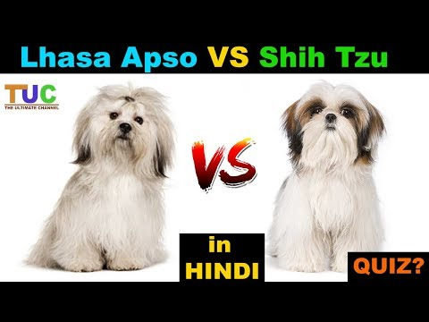 Lhasa Apso VS Shih Tzu In Hindi : Dog vs Dog : TUC : The Ultimate Channel