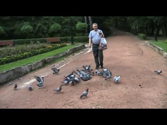 Смотреть видео Прогулка с голубями