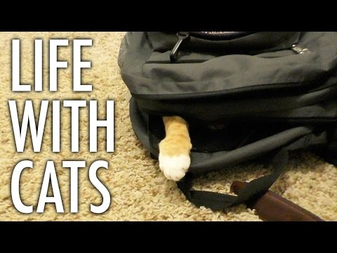 Life With Cats - Funny Compilation