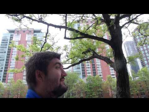 Поездка в Чикаго 11