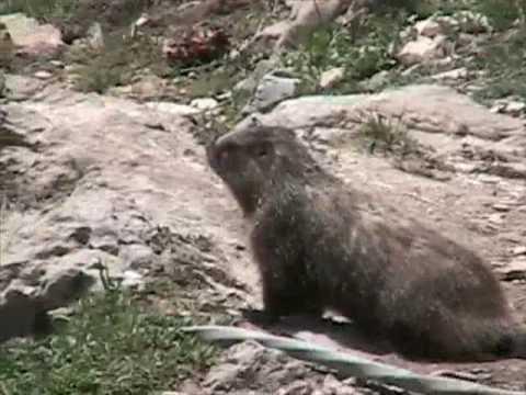 Yellowstone Animals - Part One
