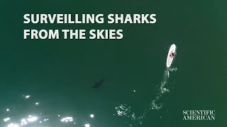 Science Captures Close Encounters Between Great White Sharks and Beachgoers With Drones