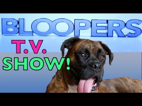 Brock the Boxer: BLOOPERS TV SHOW Appearance