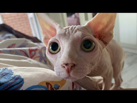 Вопрос: Почему кот, прежде чем улечься спать, крутится вокруг себя?