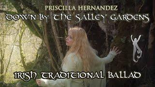 Priscilla Hernandez | Down by the Salley Gardens | Irish Folk Ballad | Beautiful Celtic Music