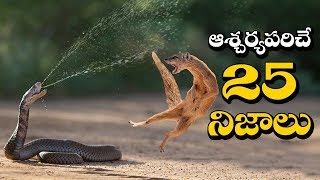 TOP 25 Interesting Facts You Never Know | Amazing Facts In Telugu | Unknown Facts Telugu
