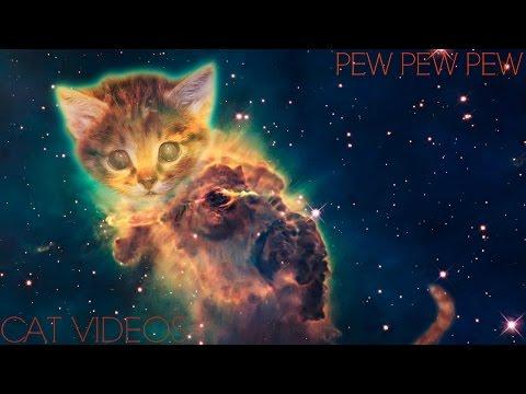 【CAT VINE COMPILATION 1】| 1 HOUR | BESTEST CATS |