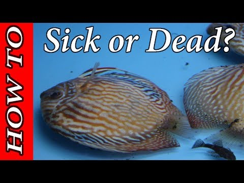 Choose If They DIE Or LIVE! How To Diagnose Aquarium Disease