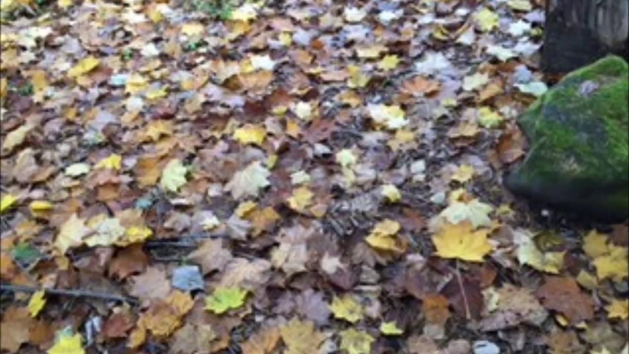 koto shakuhachi les feuilles mortes autumn. Black Bedroom Furniture Sets. Home Design Ideas