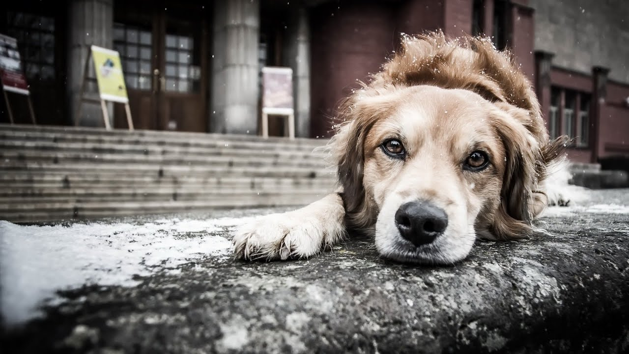 Картинки как собака ждет хозяина