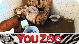 Tierheim unter Wasser - Drama in Merseburg │YouZoo