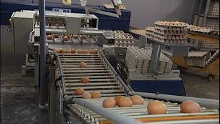 Scandale sanitaire : des millions d'œufs retirés de la vente en Europe